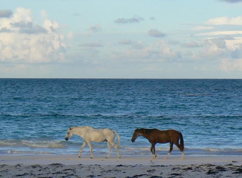 wild horses madmen vacation home